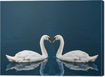 Two white swan Canvas Print