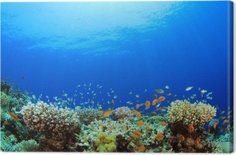 Underwater Coral Reef and Tropical Fish Canvas Print