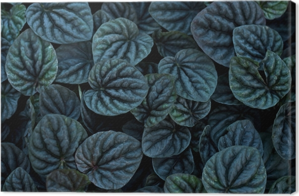 Unusual Beautiful Dark black leaves texture for background add color filter Canvas Print - Hygge