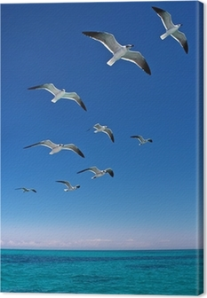 Various seagulls flying over a blue sea Canvas Print