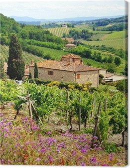 View through vineyards with stone house, Tuscany, Italy Canvas Print