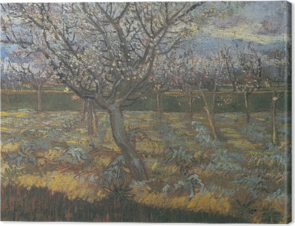 Vincent van Gogh - Orchard with Apricot Trees in Blossom Canvas Print - Reproductions