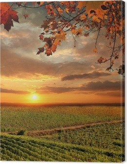 Vine landscape in Chianti, Italy Canvas Print