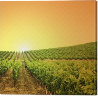Vineyard on a hill Canvas Print