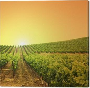 Vineyard on a hill Canvas Print