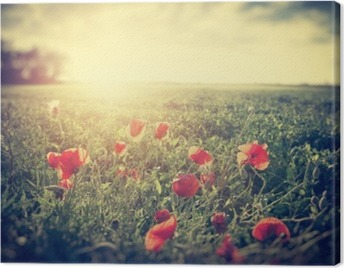 Vintage photograph of a poppy meadow. Rural landscape Canvas Print