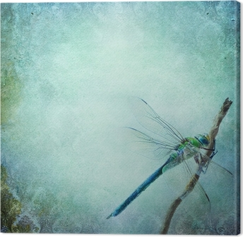 Vintage shabby chic background with dragonfly Canvas Print