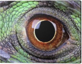 water dragon eye Canvas Print