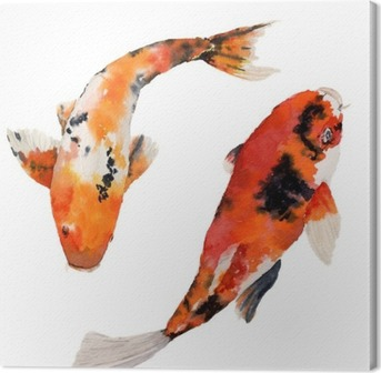 Watercolor Oriental Rainbow Carp Set Koi Fishes Isolated On White
