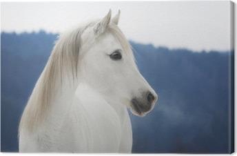 Weiße Vollblut Araber Stute im Schnee Canvas Print