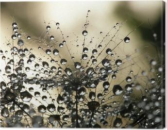 Wet dandelion seed Canvas Print