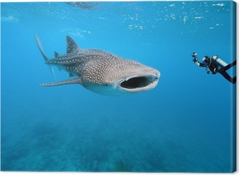 Whale shark and underwater photographer Canvas Print
