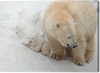 white bear Canvas Print