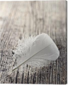 White feather Canvas Print