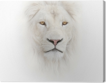 white lion on the white background Canvas Print