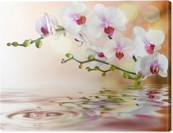 white orchids on water with drop Canvas Print