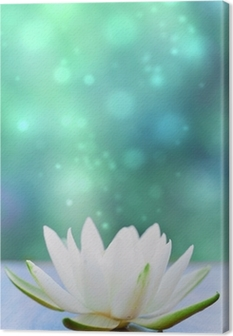 white water lilly flower Canvas Print