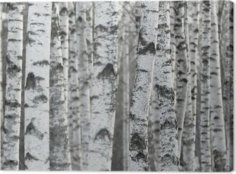 Winter Birch Tree Forest Background Canvas Print