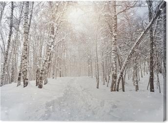 Winter birchwood Canvas Print