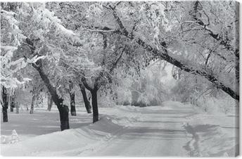Winter park, scenery Canvas Print