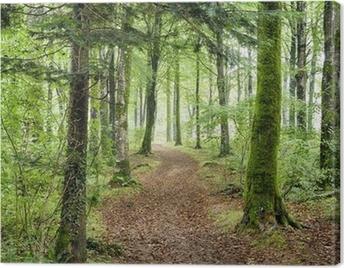 Woodland Path Canvas Print