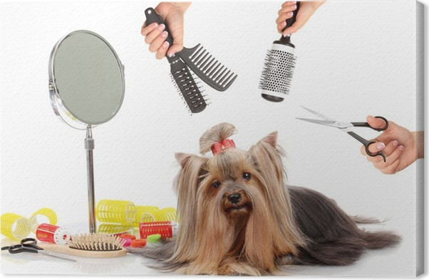 Yorkshire Terrier Grooming At The Salon For Dogs Canvas Print
