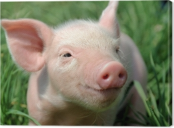 Young pig on a green grass Canvas Print