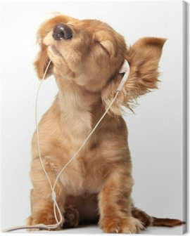 Young puppy listening to music on a head set. Canvas Print