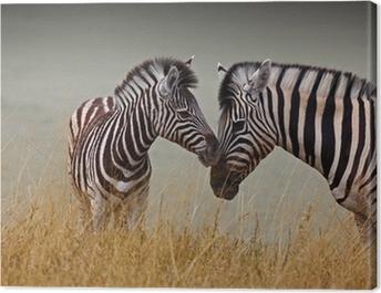 Zebre - Madre e figlio Canvas Print