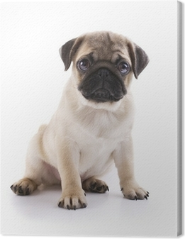 Canvas Pug Puppy