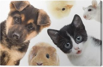 Canvas Puppy en kitten en cavia