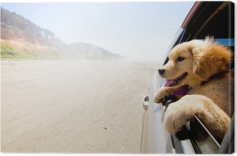 Canvas Puppy kijkt uit het raam van een auto