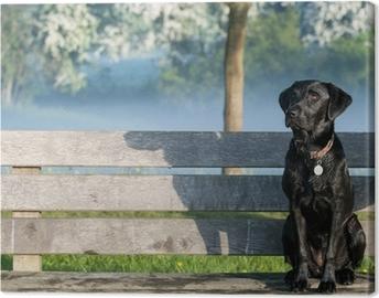 Canvas Puppy labrador op de bank