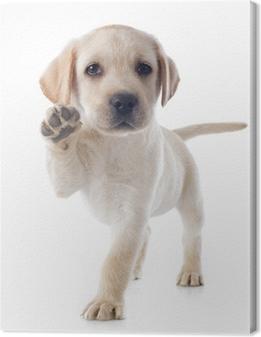 Canvas Puppy - labrador retriever