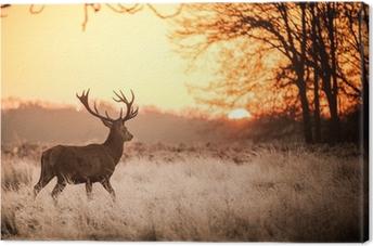 Canvas Red Deer in de ochtend zon.