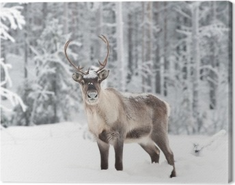 Canvas Reindeer