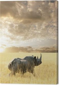 Canvas Rhino