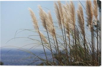 Canvas Riet leiden door de wind