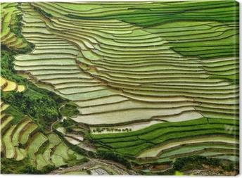 Canvas Rijstveld op terrasvormige in berg.