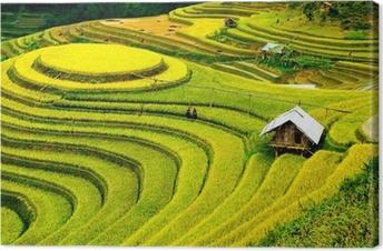 Canvas Rijstvelden op terrassen in Vietnam