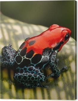 Canvas Rode pijlgifkikker