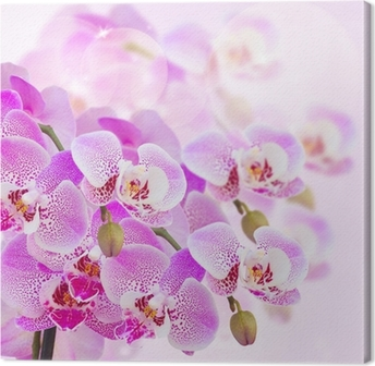 Canvas Roze orchidee tak close-up