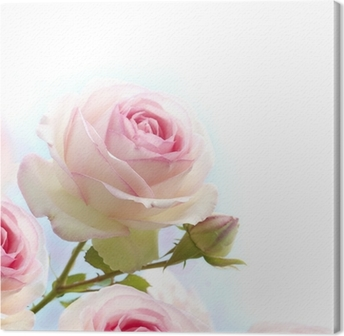 Canvas Roze roos over blauwe witte achtergrond