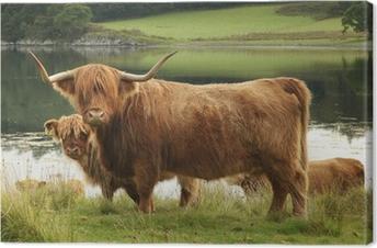 Canvas Schotse hoogland koe in het veld