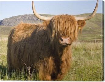 Canvas Schotse hoogland koe