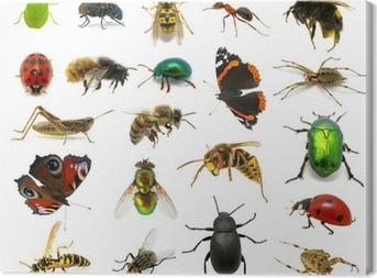 Canvas Set van insecten