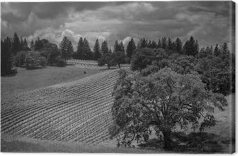 Canvas Shake Ridge Ranch Vineyards