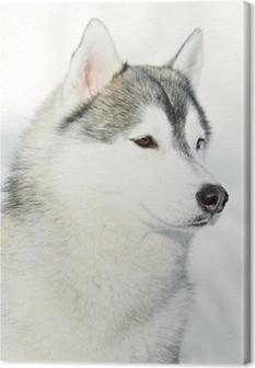 Canvas Siberisch schor hondportret bij de winter