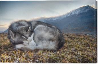Canvas Slapen Siberische Husky in de bergen