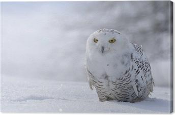 Canvas Sneeuwuil zitten in de sneeuw